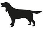 Deutscher Wachtelhund- Křepelák
