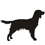 Münsterländer Vorstehhund
